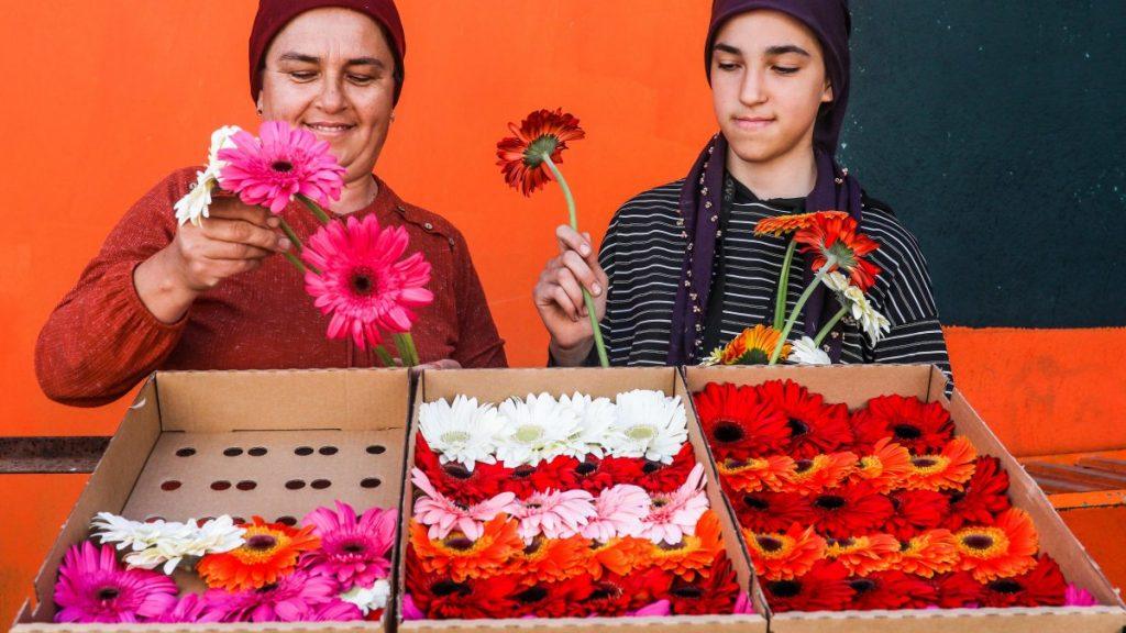 Dünya kadınlarının çiçekleri, Antalyalı kadın tarım işçilerinin eliyle hazırlanıyor